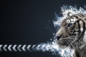 Harimau Putih Wallpaper Hd Wallpapers Wallhere