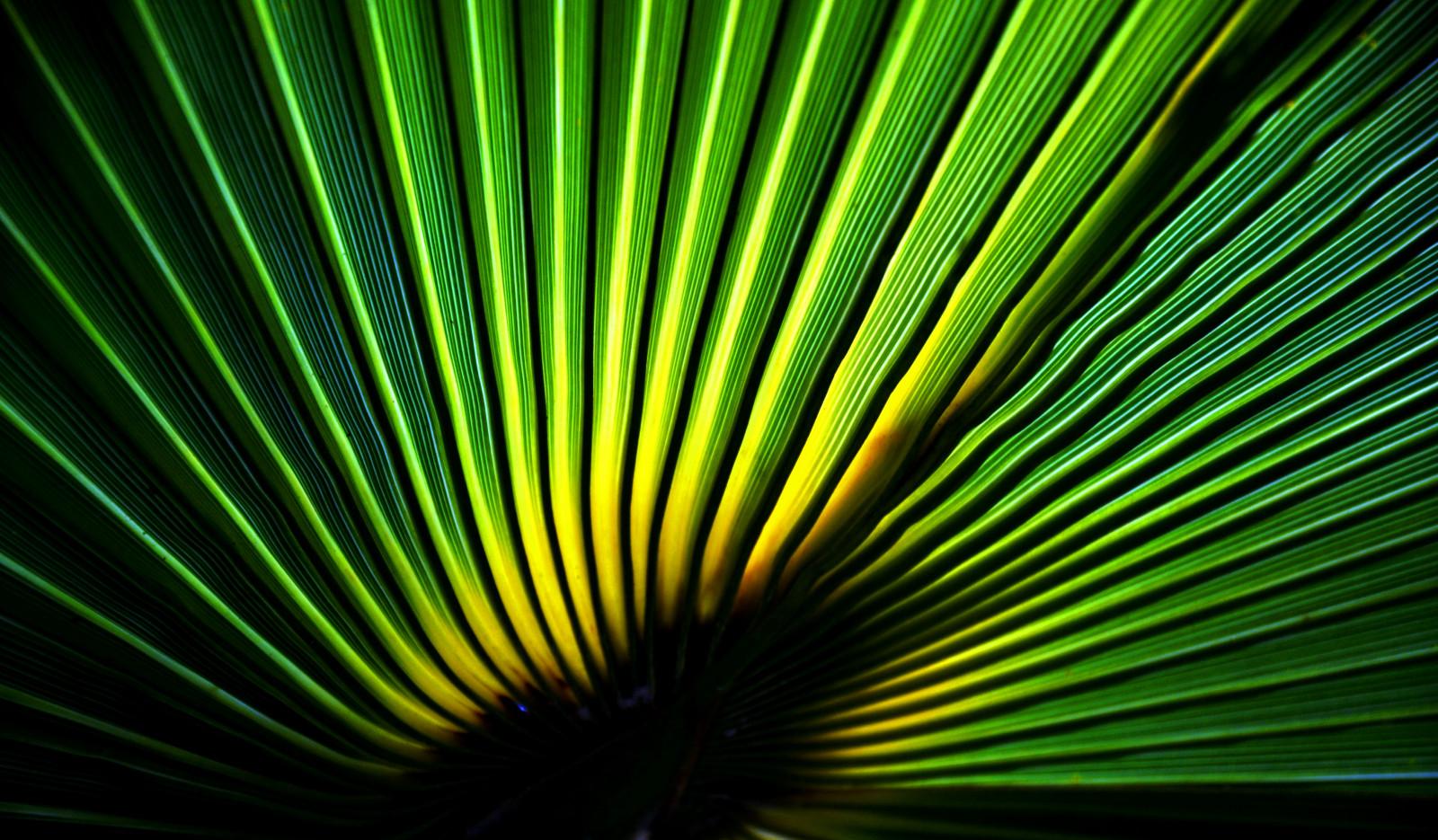 Fond d'écran : lumière du soleil, abstrait, vert, jaune ...