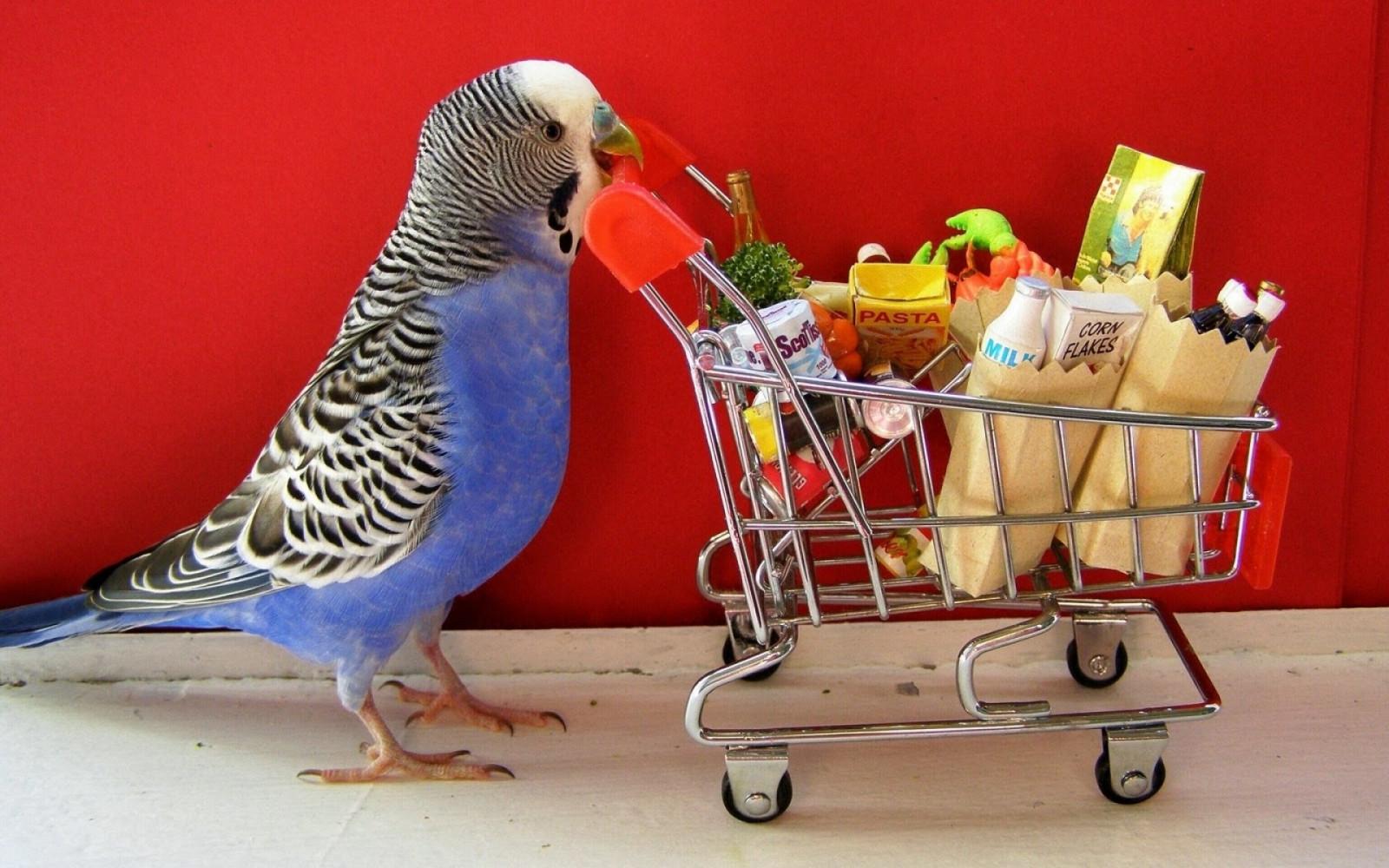 Веселые картинки про попугаев