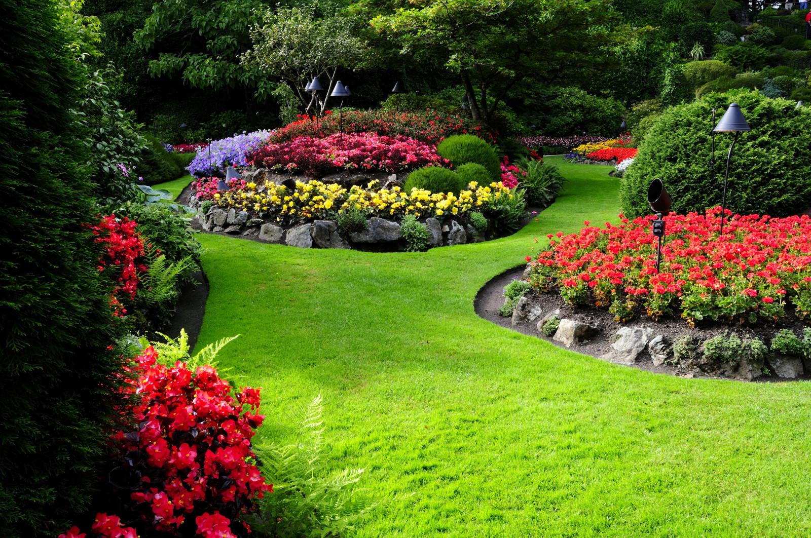 Соседство цветов в саду фото