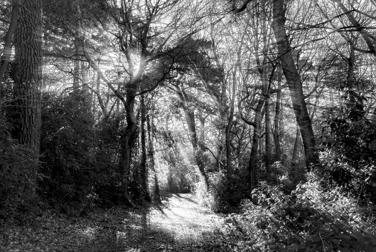 Wallpaper Sunlight Trees Landscape Contrast Leaves