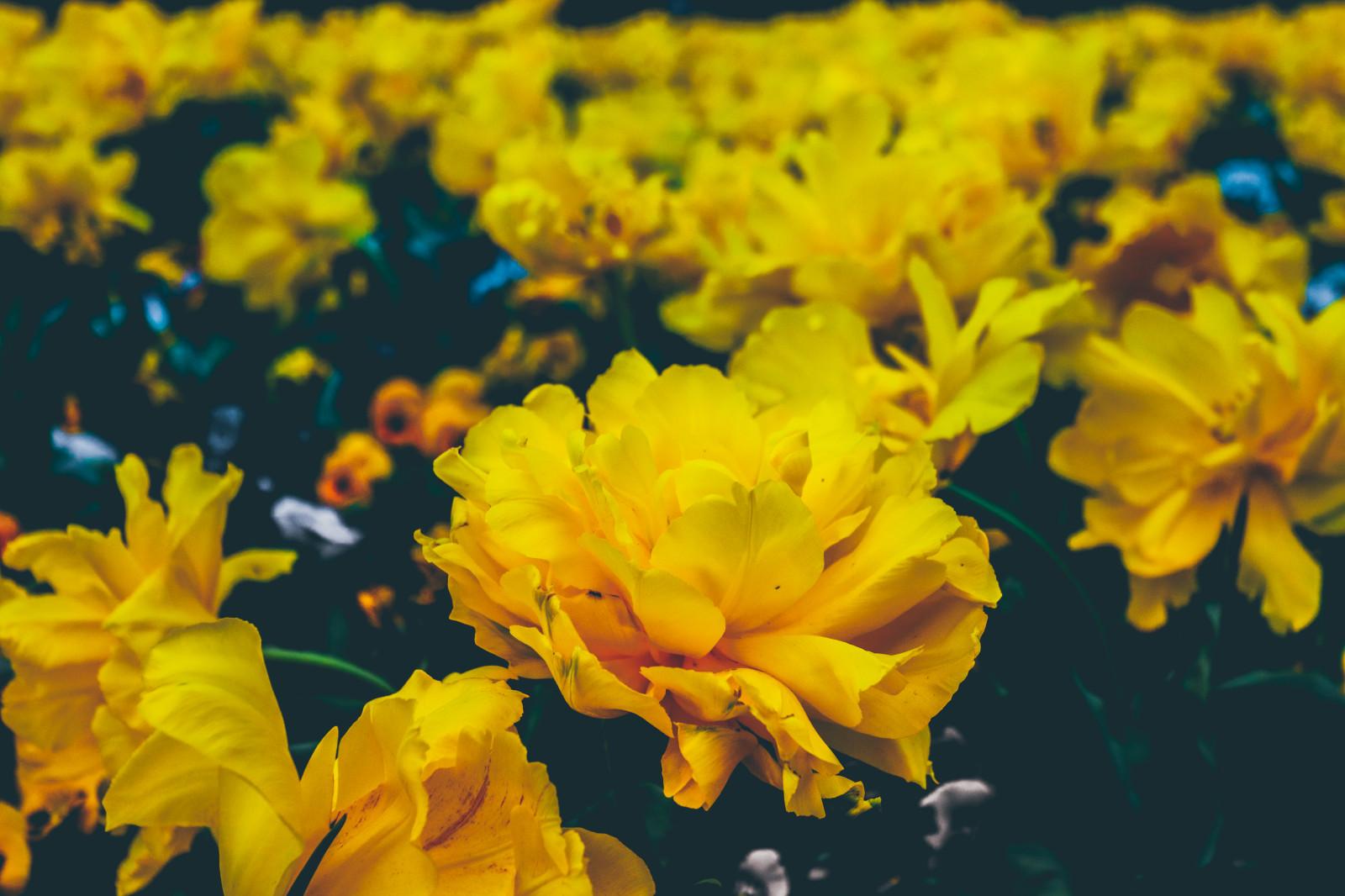 Гипноз, желтые картинки красивые