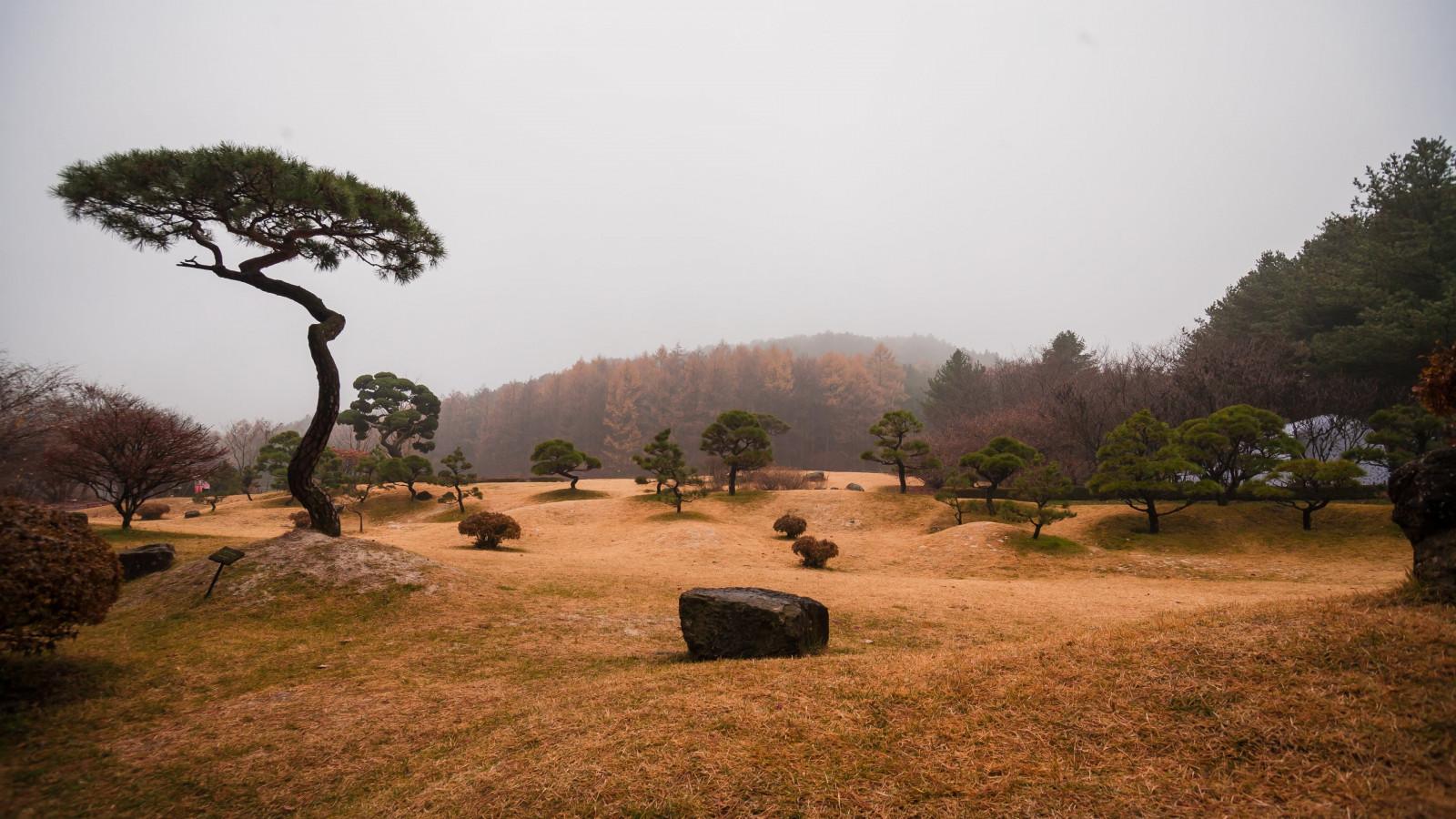 tags tree landscape -#main