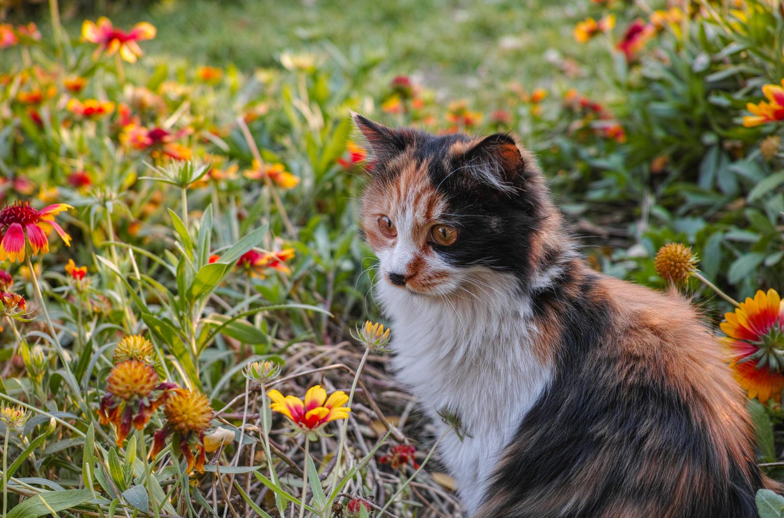 Sfondi erba autunno fiore dp2m miei amici gattino for Gatto della foresta norvegese