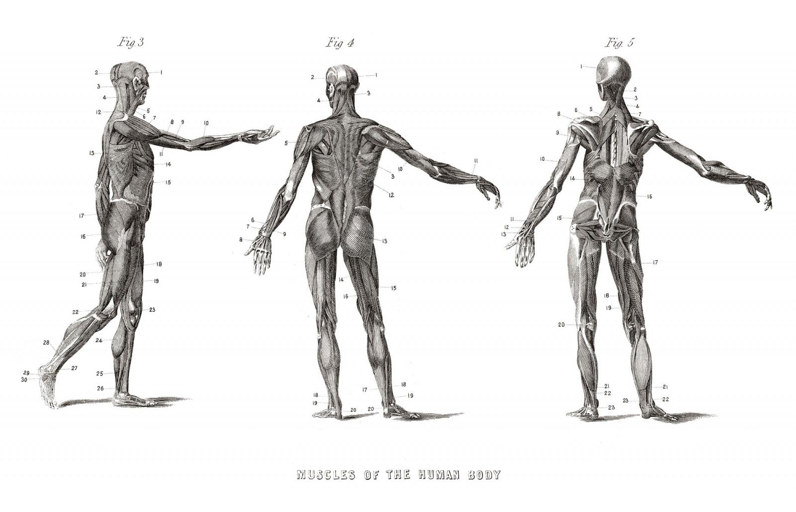 Hintergrundbilder : Illustration, Karikatur, Wissenschaft, Skelett ...