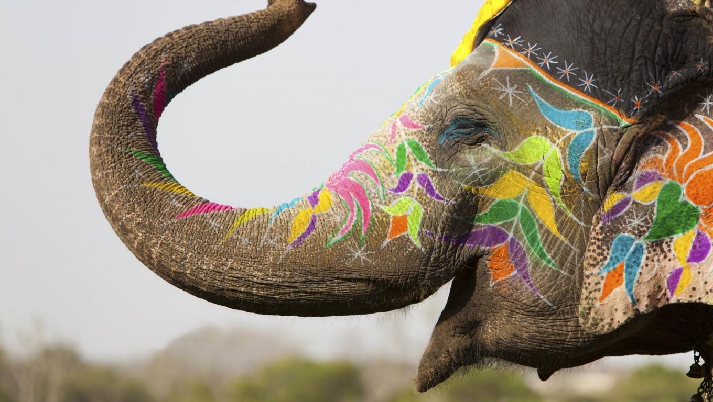 Wallpaper Animals Body Paint India Elephant Holi
