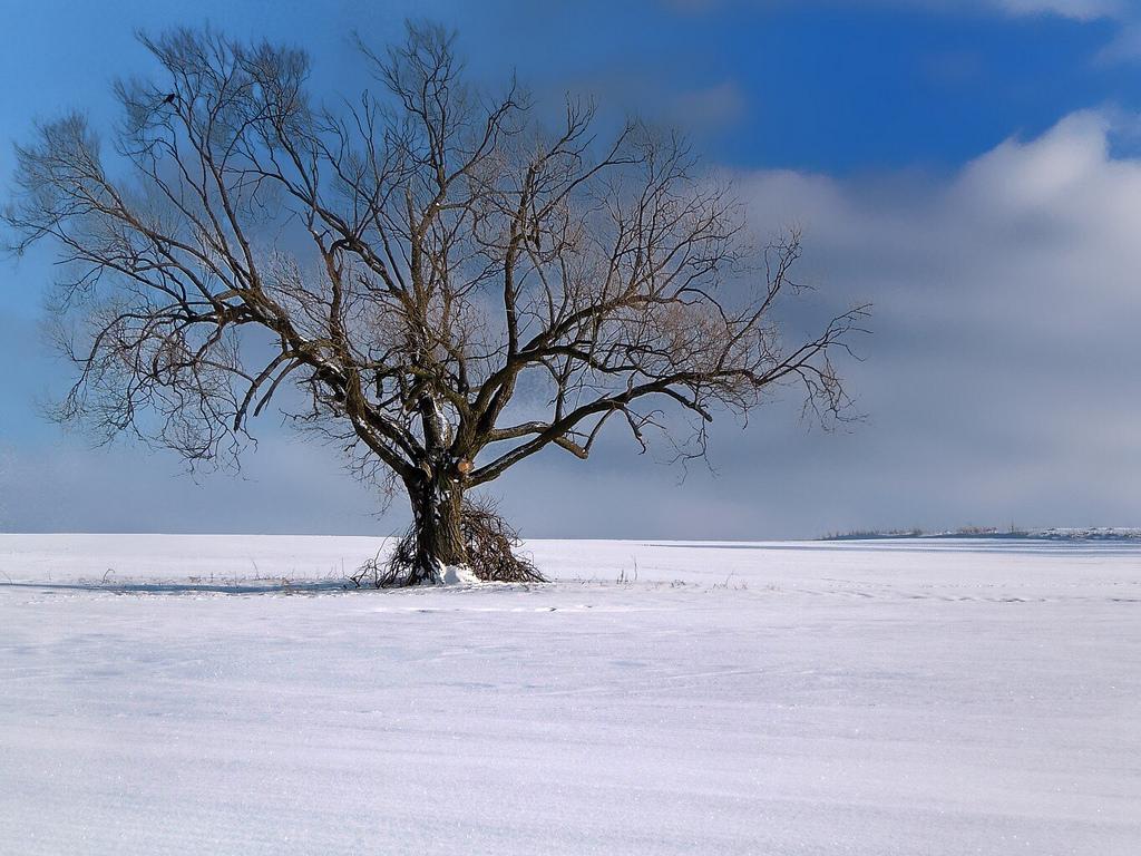 デスクトップ壁紙 ケムニッツ 土地 風景 ナチュラル 自然