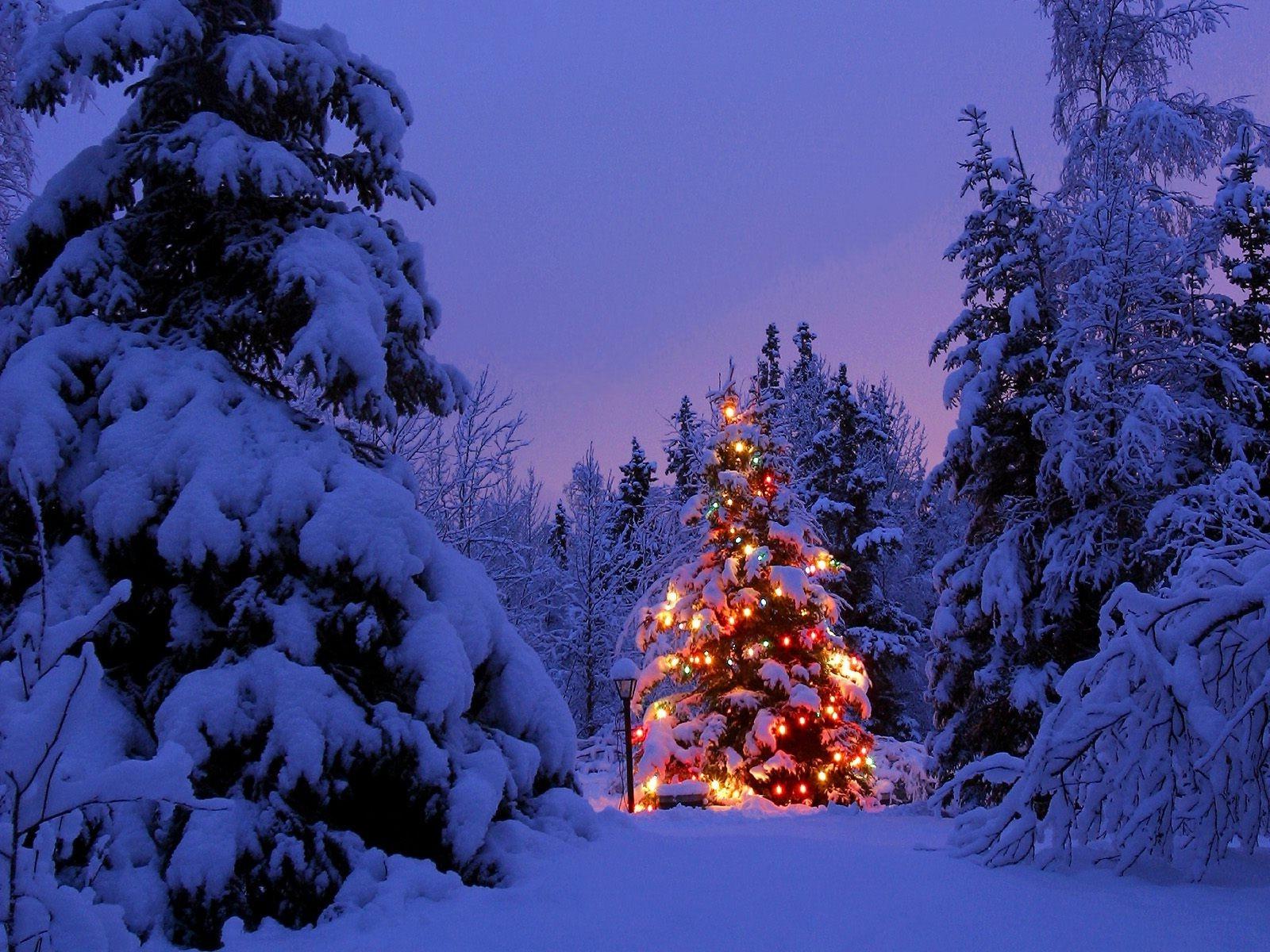 Hintergrundbilder : Landschaft, Wald, Nacht-, Natur, Himmel, Schnee ...