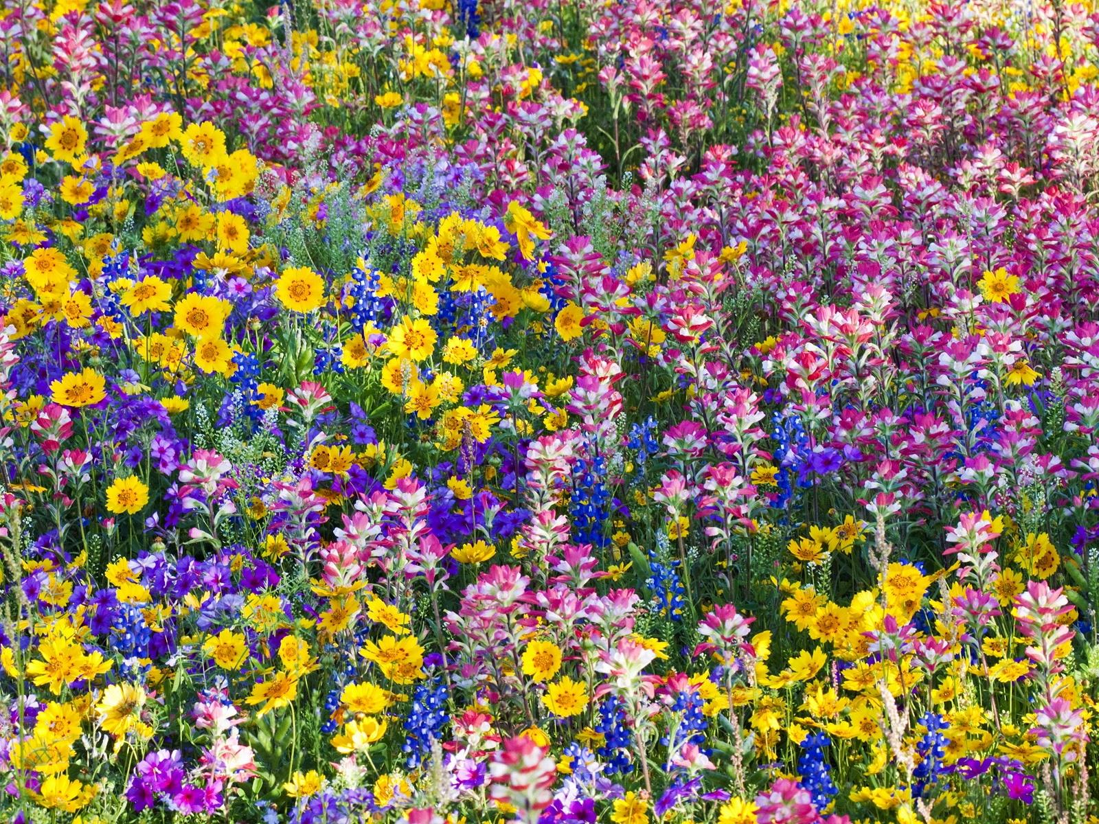 Sfondi Fiori Estate Luminosa Fiore Umore Flora Dipingere