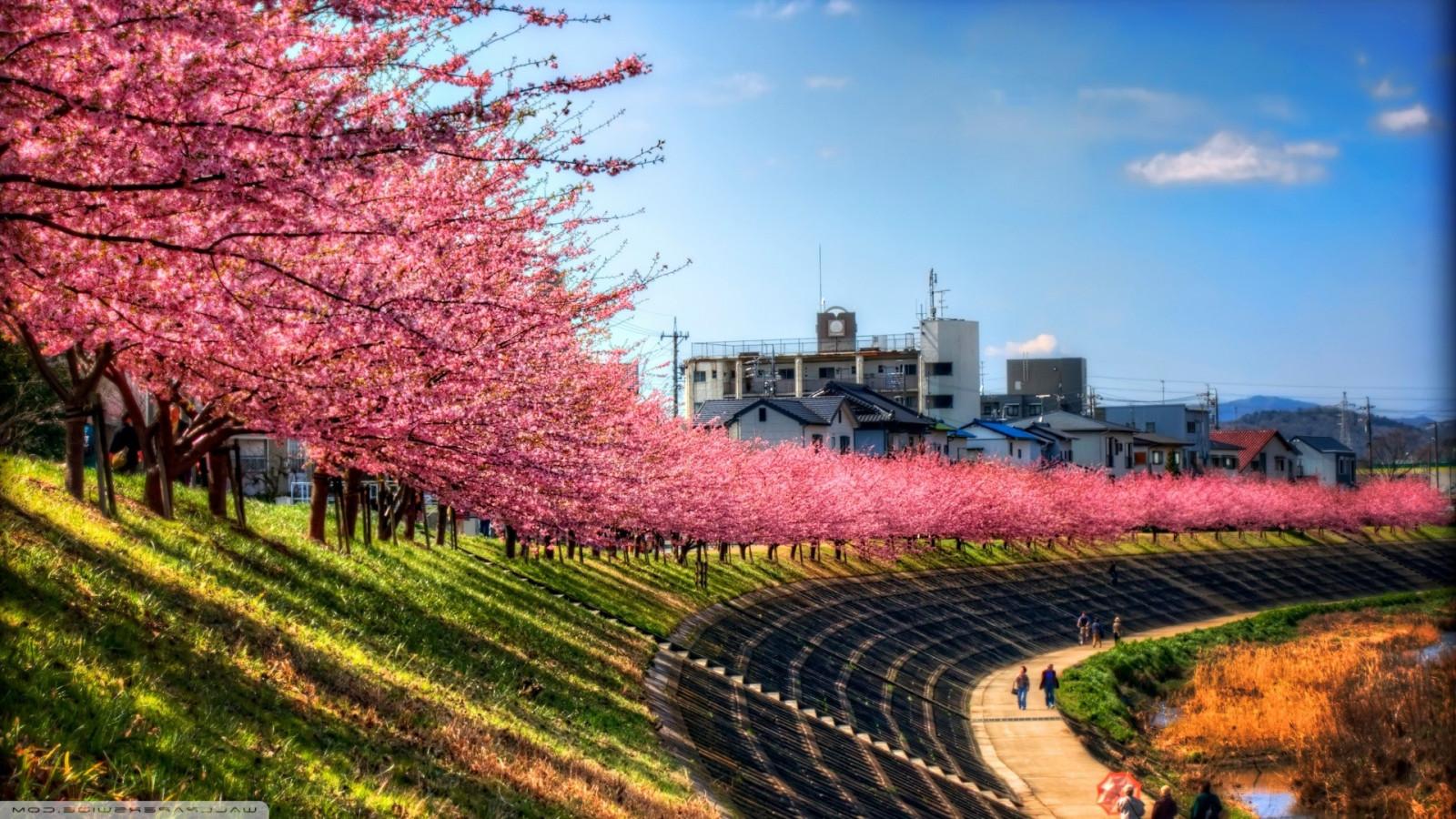 Wallpaper : Jepang, pohon, pemandangan, kota, rumput, langit