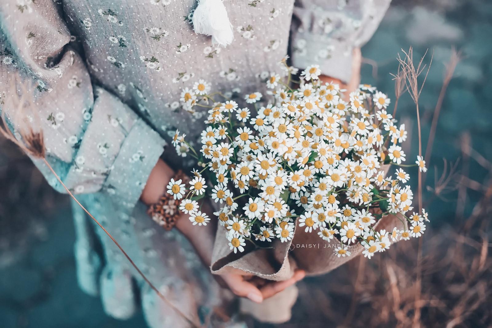 Ромашки букет полевых цветов в руками, популярный