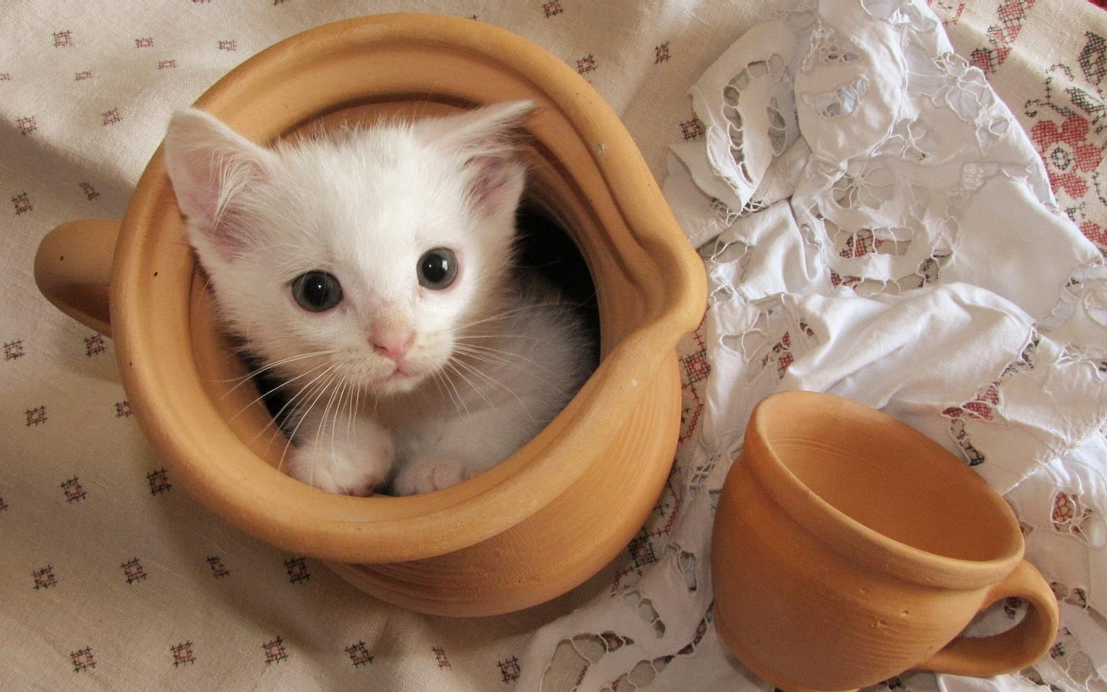 С Добрым утром, котенок! - гиф анимация 77