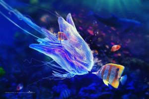 hintergrundbilder : bunt, tiere, meer, fisch, blau, unterwasser, koralle, qualle, biologie, riff