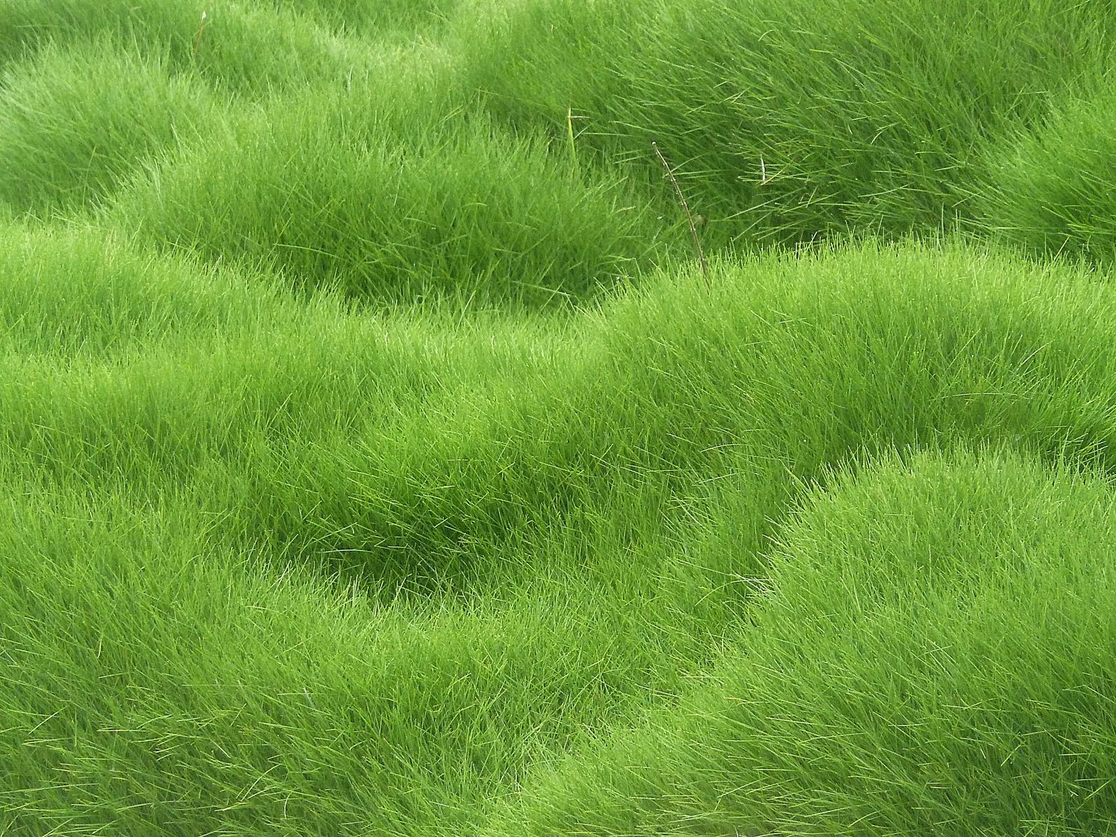Wallpaper Field Green Texture Herb Flower Grassland Pasture Meadow Lawn Prairie Soil Land Plant Ecosystem Shrub Grass Family 1600x1200 Goodfon 608485 Hd Wallpapers Wallhere