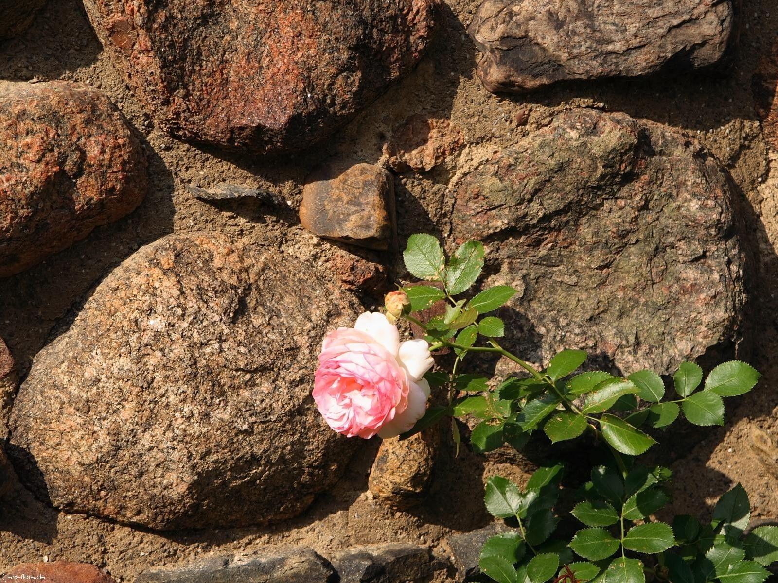 более узком картинки каменного цветочками ножки зеленых бежевых
