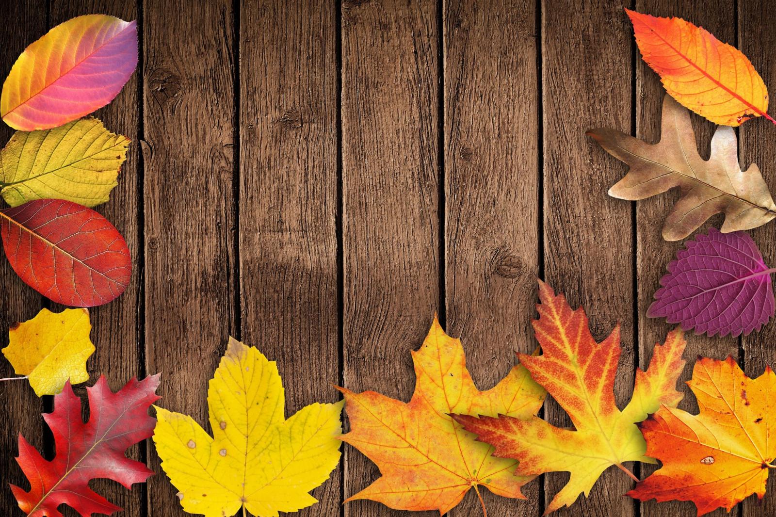 сожалению, вашему красивые картинки на телефон осень на доске первую