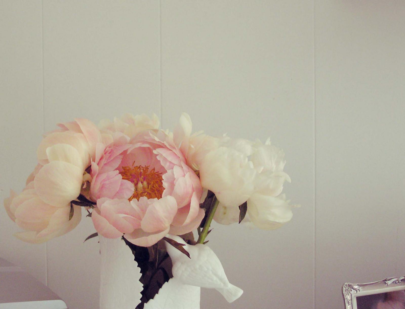 Fondos de pantalla : blanco, Flores, pared, casa, marco, rosado ...