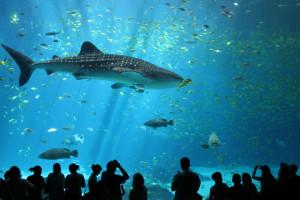 hintergrundbilder : tiere, fisch, tierwelt, unterwasser, aquarium, karpfen, biologie, fauna