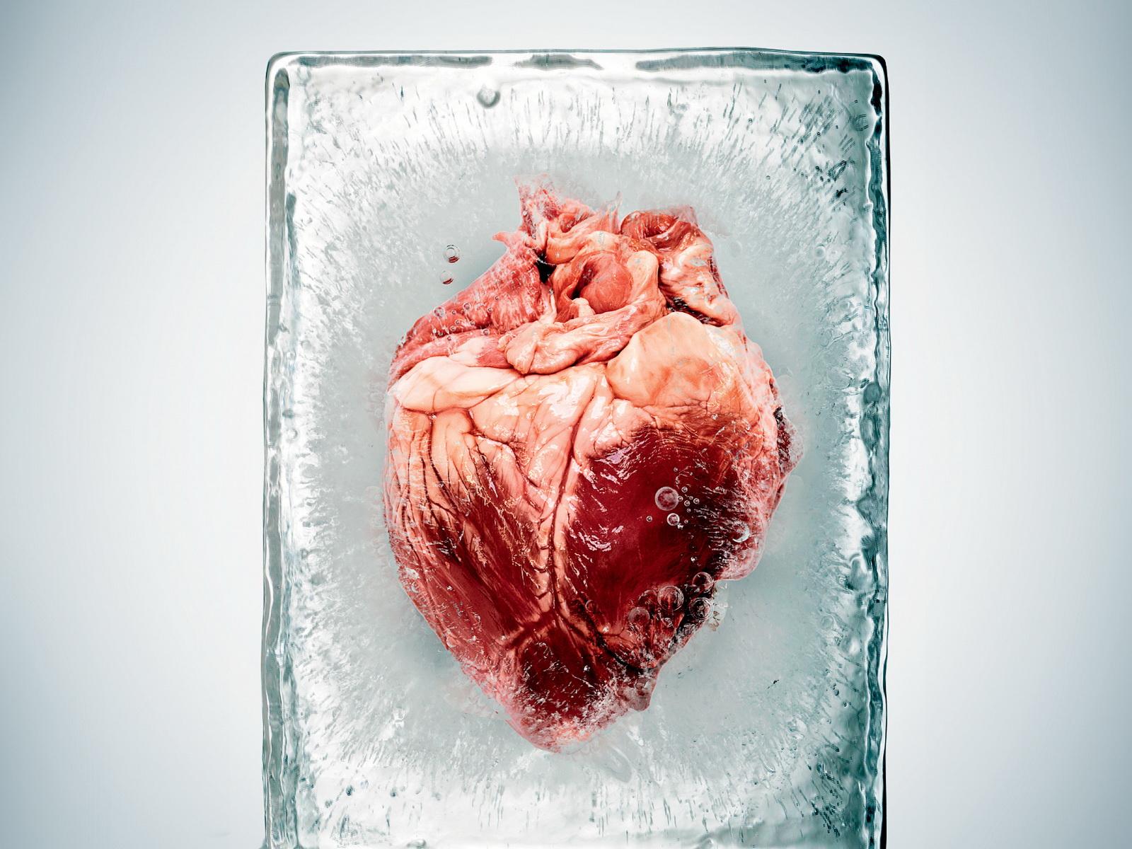Fondos de pantalla : corazón, rojo, hielo, piel, cabeza, color, flor ...