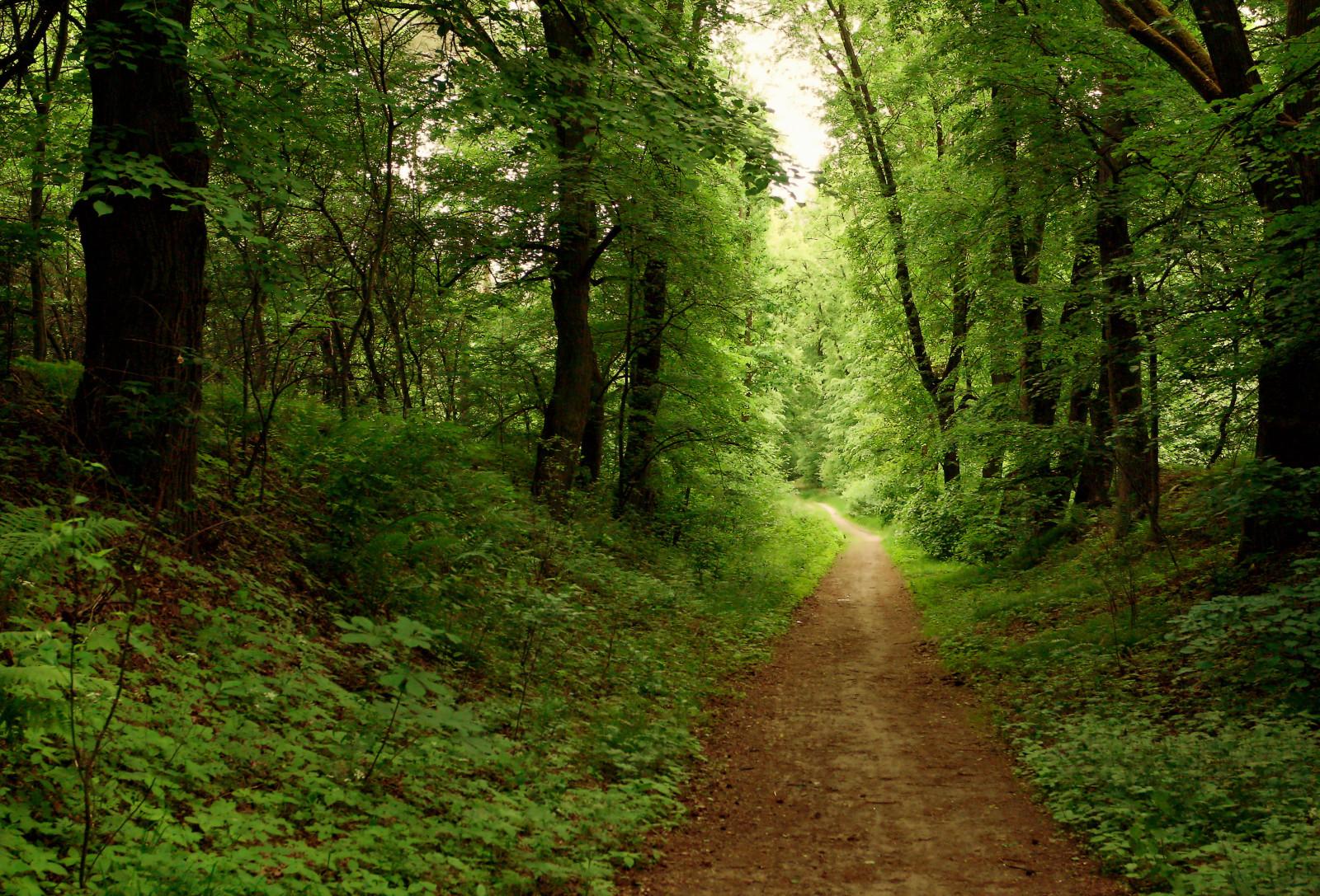 Wallpaper : road, park, wood, morning, travel, autumn ...