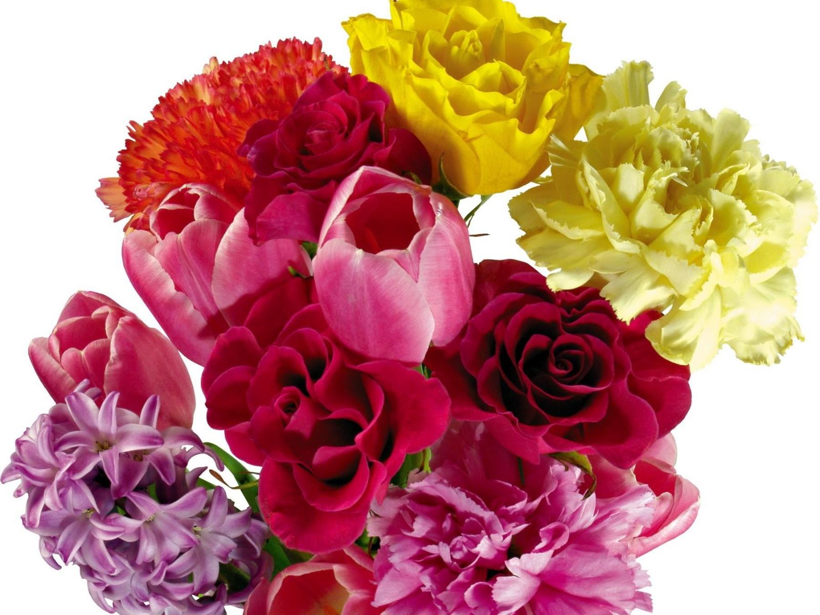 Картинки цветов тюльпанов и роз, получением прав водительских