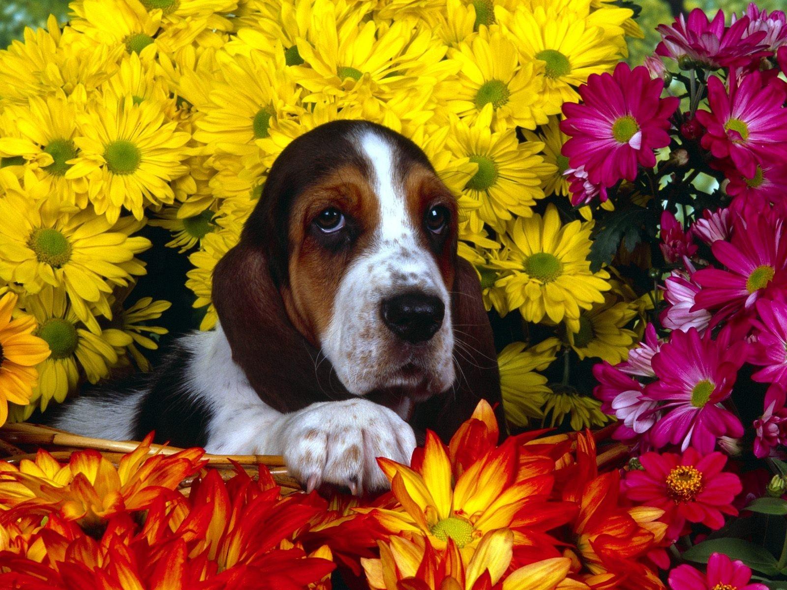 Собака картинки поздравления
