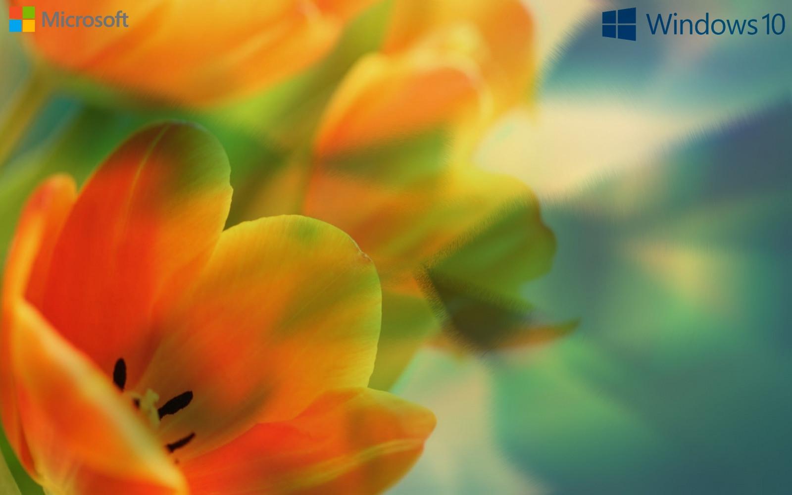 Fond d 39 cran lumi re du soleil fen tre la photographie for Fenetre windows xp