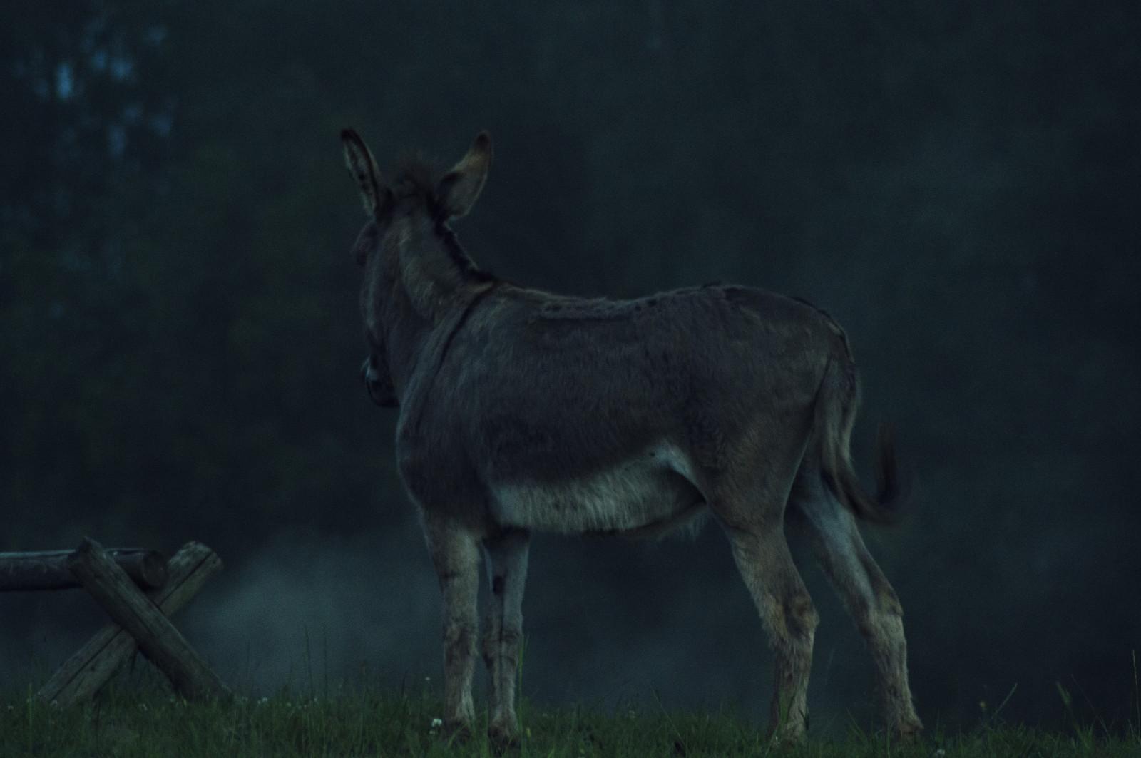 https://c.wallhere.com/photos/27/0a/animal_twilight_nikon_dusk_smoke_donkey_lonely_d3200-778902.jpg!d