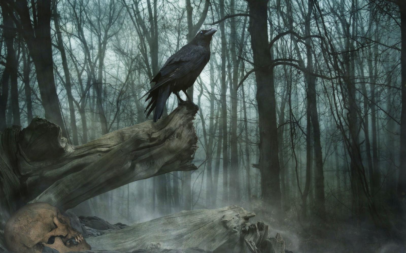 картинки загадочных птиц пользование