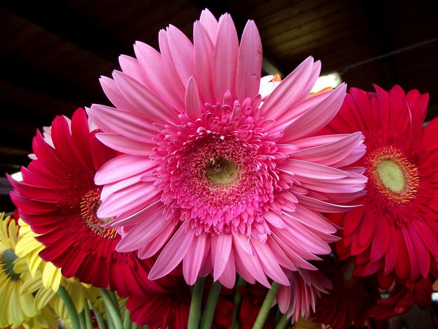 можно самостоятельно, красивые цветы фото герберы комната была выполнена