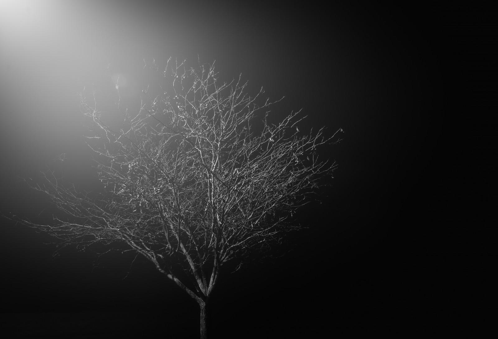 デスクトップ壁紙 日光 コントラスト ダーク 夜 シャイニング 黒と白 木 孤独な 葉 ライン 闇 コンピュータの壁紙 モノクロ写真 マクロ撮影 5442x3703 デスクトップ壁紙 Wallhere