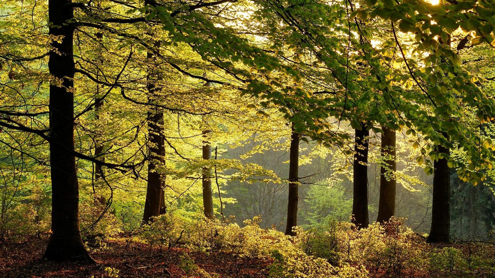 Güneş ışığı Ağaçlar Manzara orman yapraklar doğa Şube yeşil sabah Almanya Çalılar Ağaç sonbahar Yaprak çiçek bitki sezon Ormanlık alan Koruluk yetişme ortamı doğal çevre Odunsu bitki ekosistem Ilıman iğne yapraklı orman Biyom Ilıman geniş yapraklı ve karışık orman yaprak döken Kızlık soy ağacı