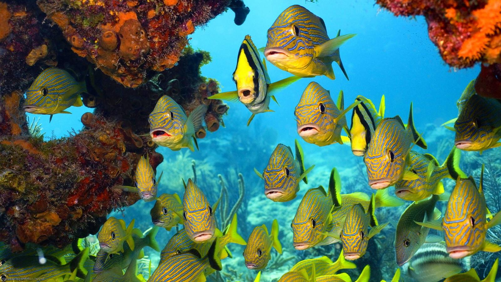 Картинки рыбками