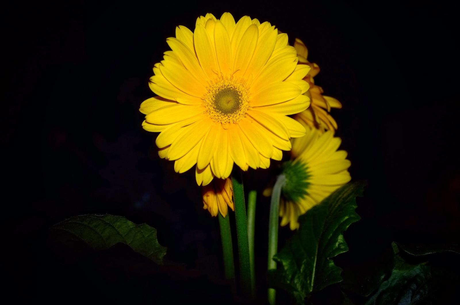 Wallpaper Nature Yellow Camera HDR IPad Fujifilm ART Light Color Flower Cool Beauty Flora Colour Colours Fuji Petal Interesting X100