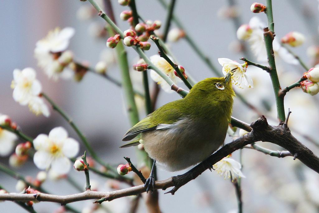 Fond d 39 cran des oiseaux fleurs jardin la nature for Oiseaux de jardin au printemps