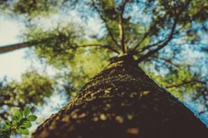 foto de Fond d'écran : lumière du soleil, des arbres, paysage, forêt, nuit ...