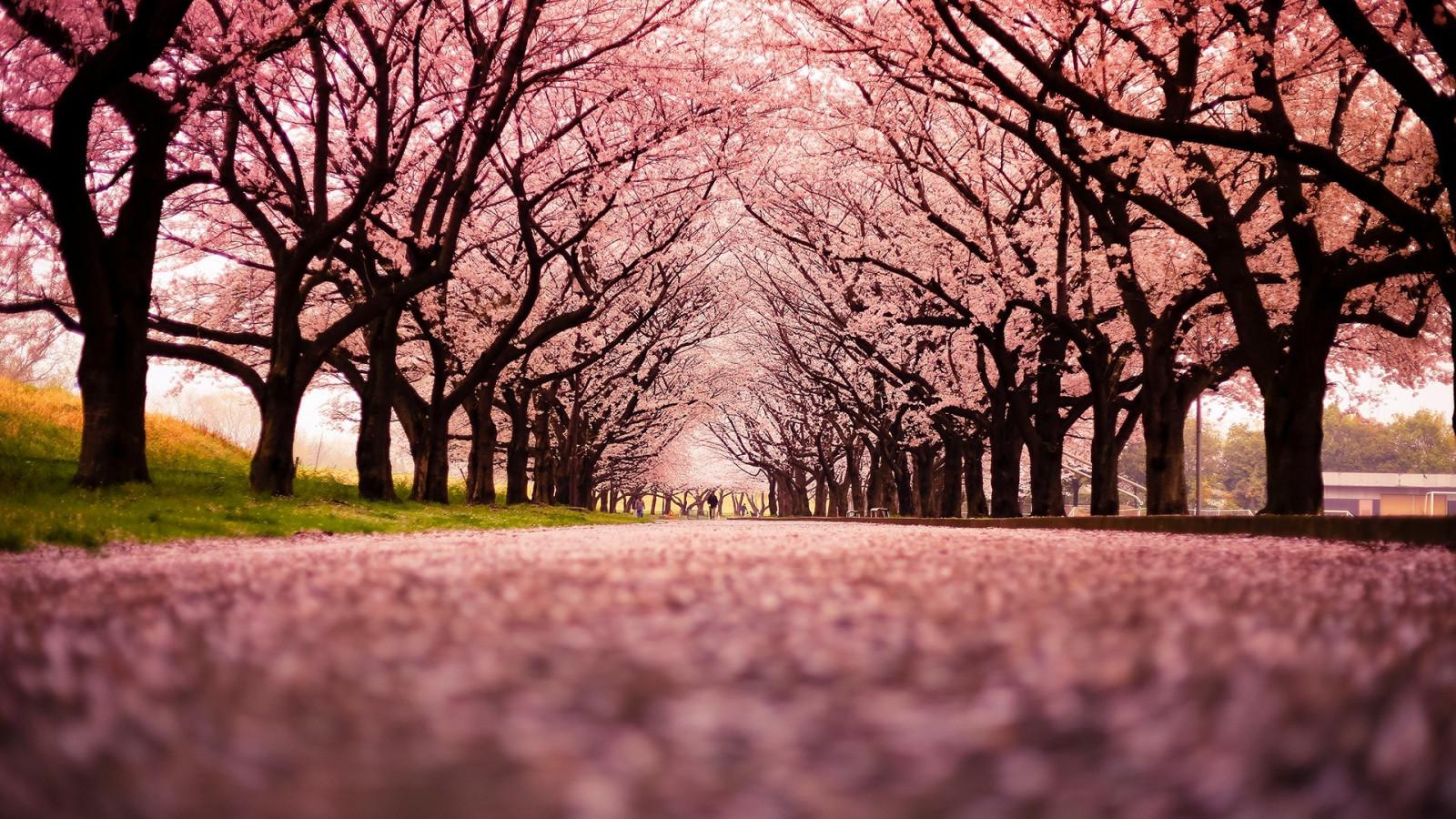 Fond d 39 cran lumi re du soleil des arbres paysage le coucher du soleil la nature branche - Arbre de l avocat ...