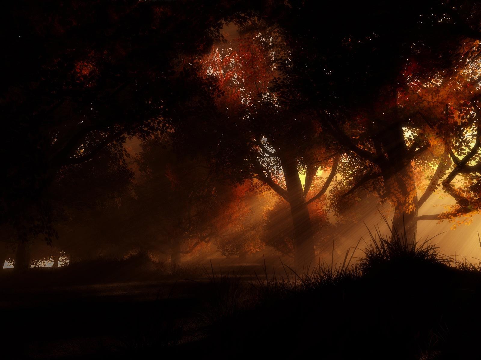 Wallpaper : sunlight, trees, night ...