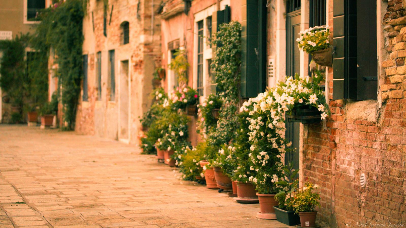 Fondos de pantalla flores jard n italia plantas for Jardines venecia