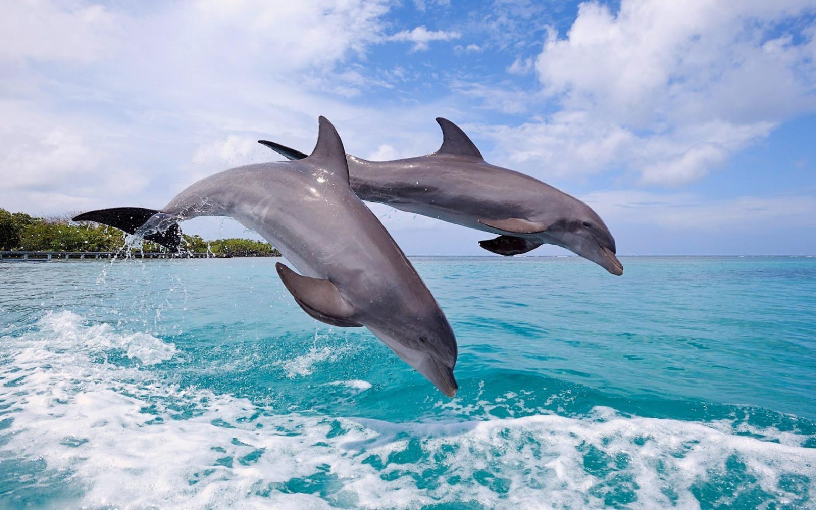 хорошего качества дельфина фото