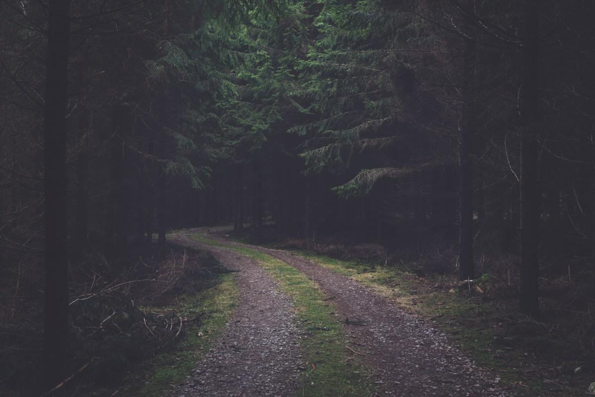 08.04.1254, Дорогу осилит идущий.  Forest_dark_road_spruce-19826