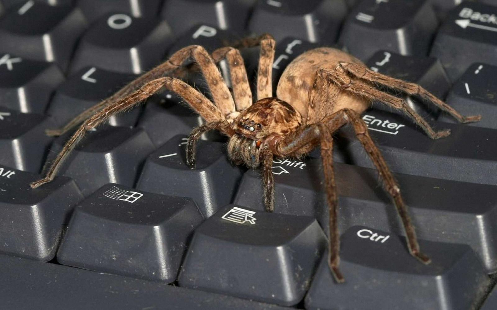 Смешные, смешные картинки с пауком