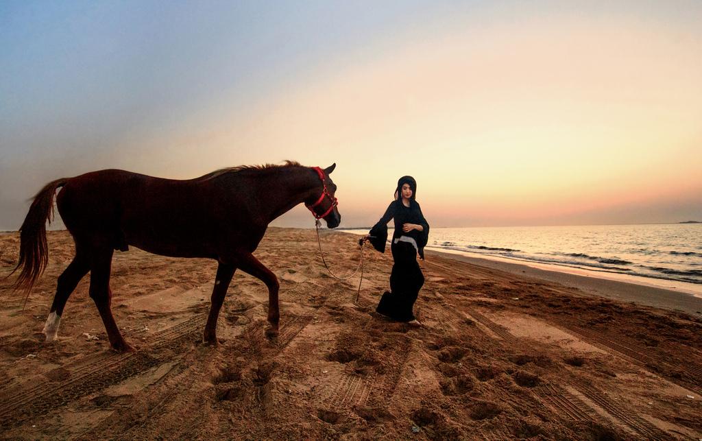 Wallpaper Sunset Horse Beach Silhouette Dubai Uae Arab