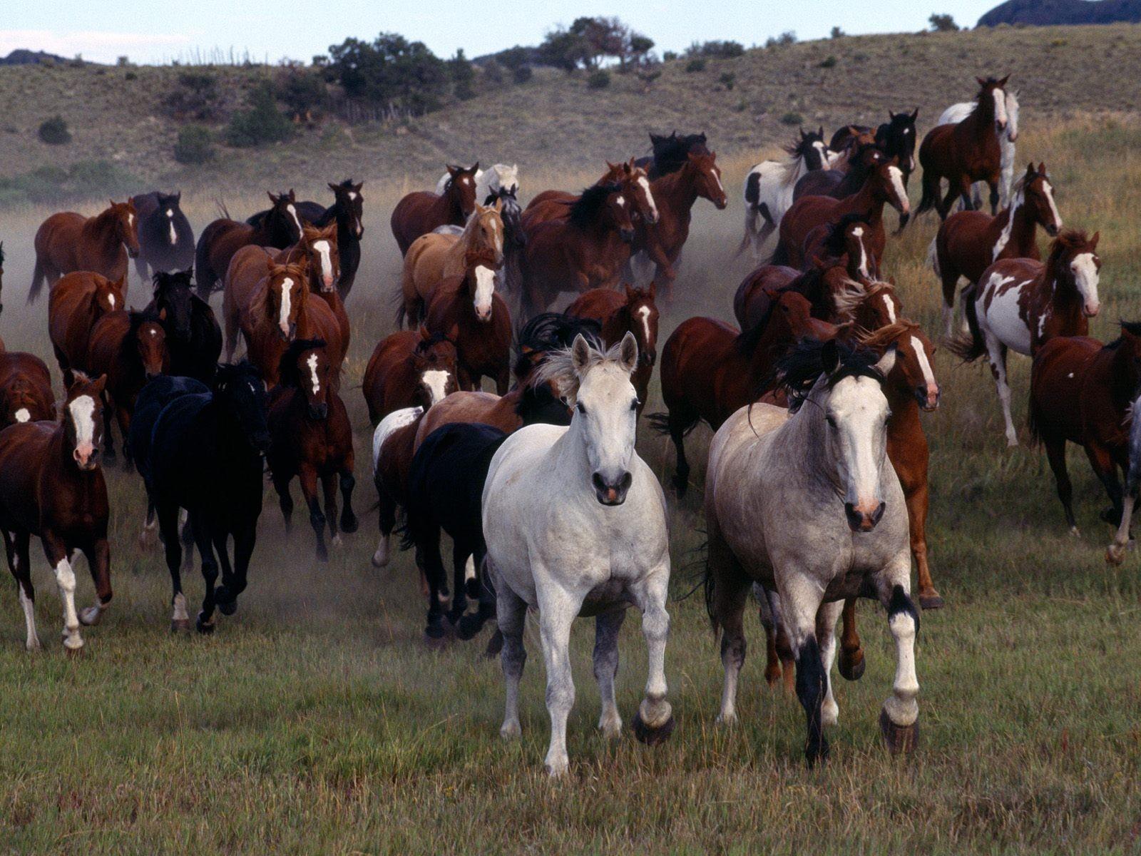 Resultado de imagem para cavalo mustang