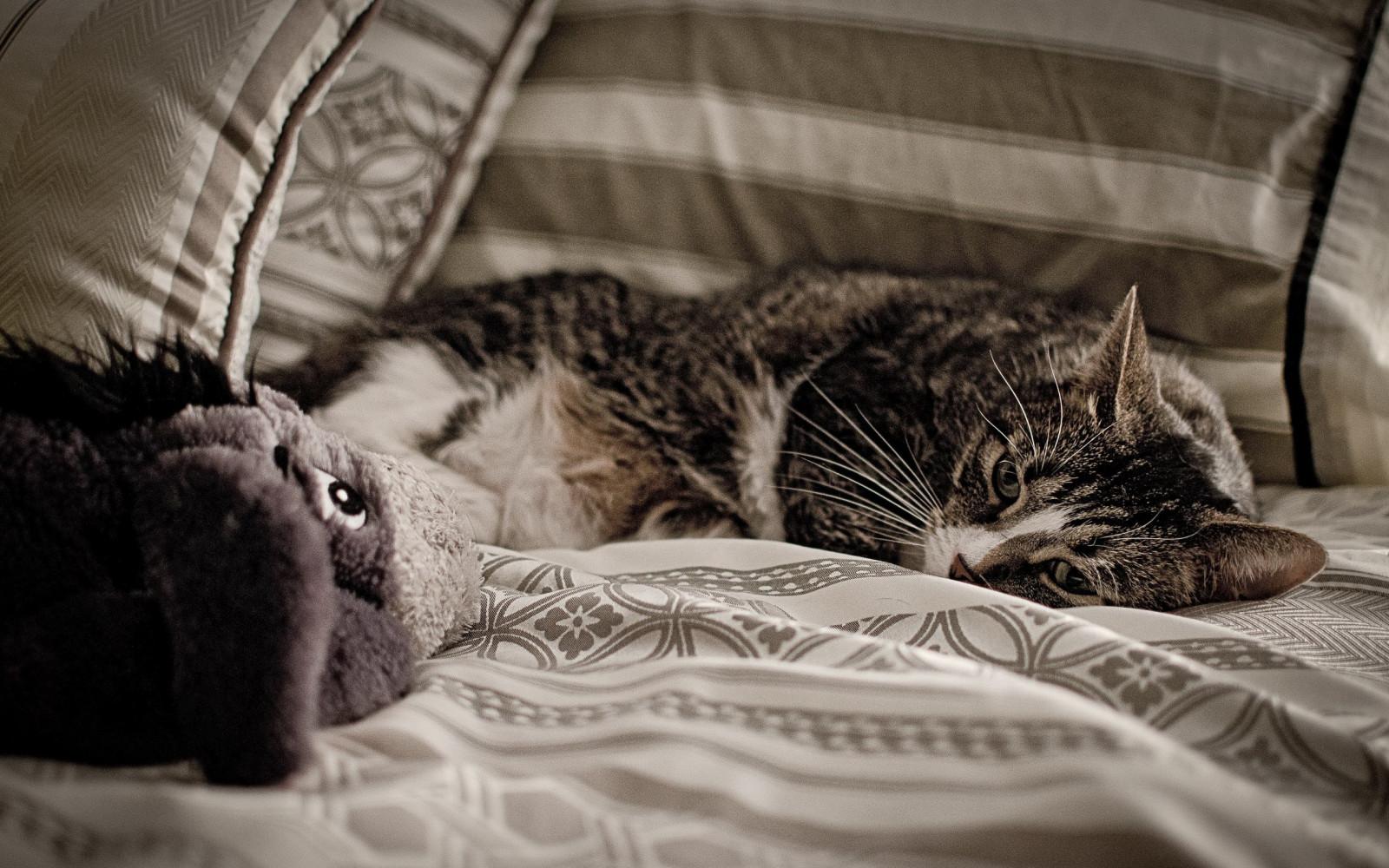 Котята в кровати картинки