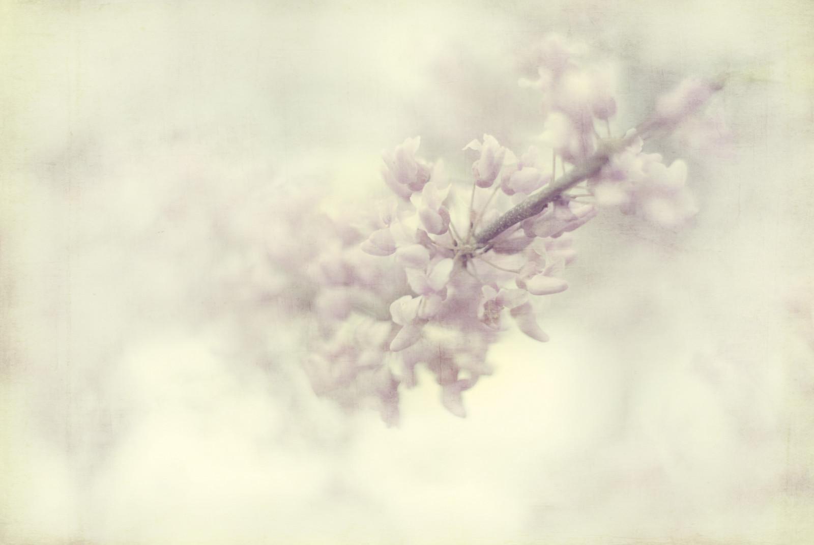 Fondos De Pantalla : Flores, Naturaleza, Primavera, Nikon