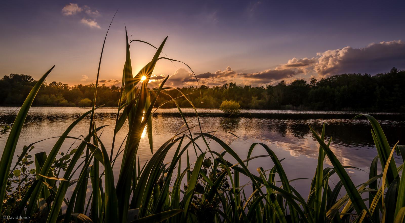 Картинки с камышами на озере