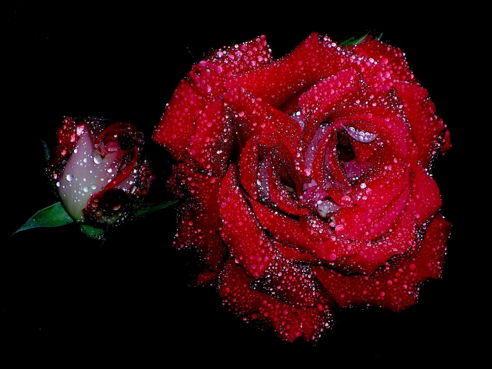 Открытку бумаги, блестящие картинки на телефон розы