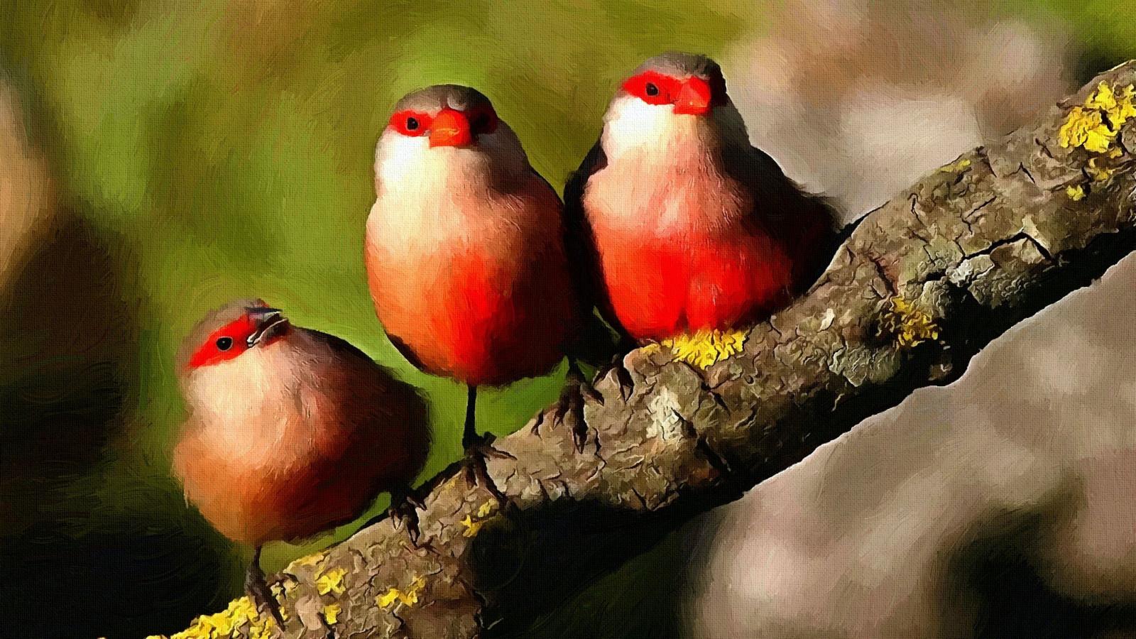 Картинки красивых животных и птиц
