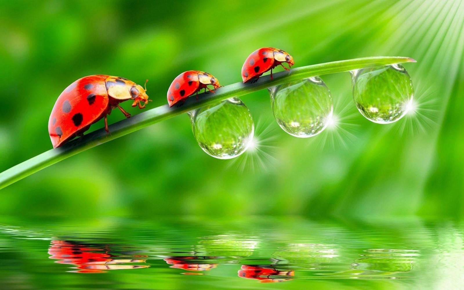 Fond d 39 cran la nature herbe la photographie insecte for La photographie